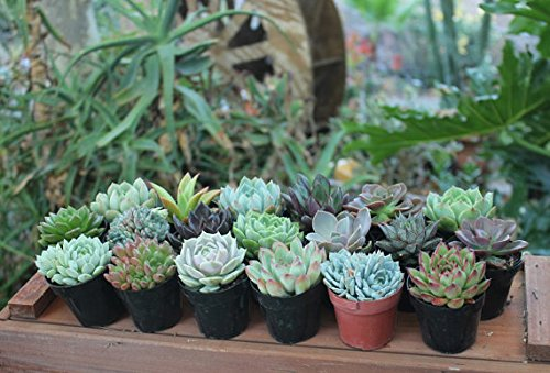 32 Gorgeous Specialty Succulent Wedding Favors in Their 2.5