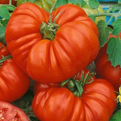 Beefsteak Tomato Beefsteak FBA 00030 (Red) 25 Heirloom Seeds by David's Garden Seeds