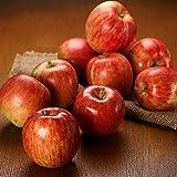 産地直送 りんご 青森黒石から産地直送!佐々木さんの農家自家用りんご 3kg 農家自家用 訳あり