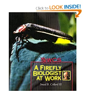 Fireflies Unit Study With Free Printables Stacy Sews
