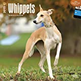 Whippets 2015 Square 12x12 (Multilingual Edition)
