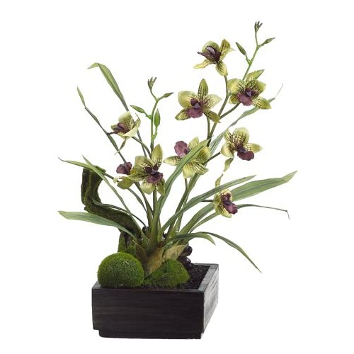 "Amazon.com : 14"" Orchid Plant/Succulent Arrangement in Wood Container"