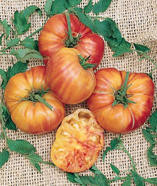 seeds-and-things-mr-stripey-tomato-30-seeds-big-juicy-beefsteak-1lb-fruit