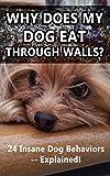 Why Does My Dog Eat Through Walls?: 24 Insane Dog Behaviors -- Explained!