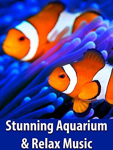 stunning-aquarium-the-best-relax-music-relaxing-screensaver