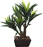 Fourwalls 41cm tall Artificial Dracaena Plant in a ceramic pot (5 branches)