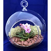 Round Hanging Mini Violet Terrarium Kit - Great Gift! - Easy to Grow - 5