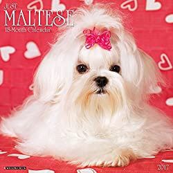 Just Maltese 2017 Wall Calendar (Dog Breed Calendars)