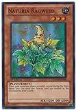 Yu-Gi-Oh! - Naturia Ragweed (HA04-EN050) - Hidden Arsenal 4: Trishulas Triumph - 1st Edition - Super Rare