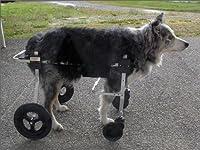 老化や病状の進行で4肢とも弱く自力で立っていられない愛犬のための「K-9 カスタム」 4肢サポート車いす 18.1〜27kg
