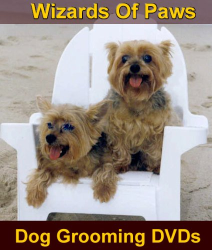 grooming yorkshire terriers three styles of yorkies are shown in this ...