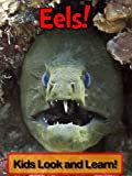 Eels! Learn About Eels and Enjoy Colorful Pictures - Look and Learn! (50+ Photos of Eels)