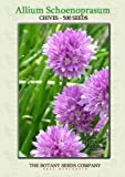 Chives Medium (500) Seeds - Allium Schoenoprasum - Herb Seeds
