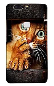 Omnam Cat Printed Near Printed Designer Back Cover Case For Huawei Honor V8