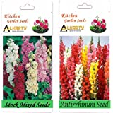 Alkarty Stock Mixed And Antirrhinum Snapdragons Seeds Pack Of 20 (Winter)