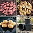 Complete Patio Potato Growing Kit Including Seed Potatoes, P
