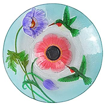 Peaktop Hummingbird Playing Around Glass Plate Bird Bath