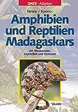 Amphibien und Reptilien Madagaskars, der Maskarenen, Seychellen und Komoren: Unter Mitarb. v. Knöthig, Michael / Liebel, Klaus / Zobel, Roland (DATZ-Atlanten)