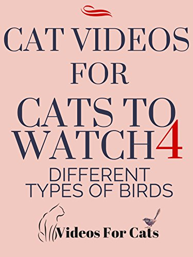 Cat Videos for Cats to Watch 4 Different Types of Birds