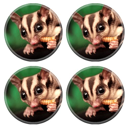 MSD Round Coasters The sugar glider Petaurus breviceps eats beetle larva Small omnivorous arboreal gliding possum Image 19316814 by MSD Customized Tablemats Stain Resistance Collector Kit Kitchen Tab