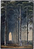 Greetings Card: 'Avenue of Trees'