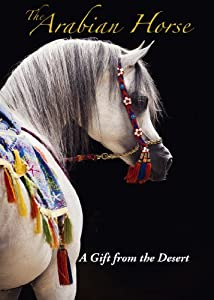The Arabian Horse A Gift from the Desert