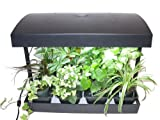 Grow Light Indoor Garden for herbs, vegetables, fruits and flowers by SunBlaster. 24