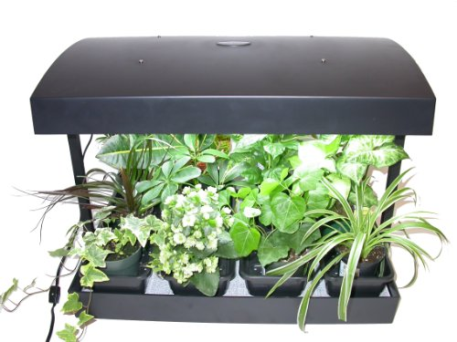 The Right Collection Of Herb Garden Kits Evergreen Herb Gardens