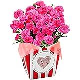 カーネーション 5号鉢 ピンク フラワーギフト 花鉢 母の日ギフト