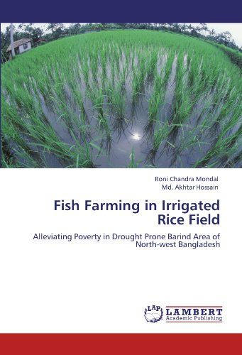 fish-farming-in-irrigated-rice-field