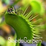 セール!100種子/多くの共通ハエトリソウ種子盆栽鉢植えハエジゴクMuscipula植物種子テラスガーデン食虫植物種子、#の4KRROY