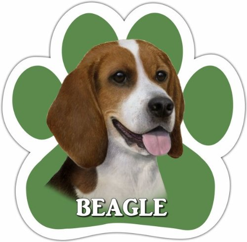 Beagle Car Magnet With Unique Paw Shaped Design Measures 5.2 by 5.2 Inches Covered In High Quality UV Gloss For Weather Protection