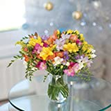 #6: 20 Guernsey Freesias