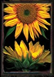 Toland Home Garden Sunflowers on Black 28 x 40-Inch Decorative USA-Produced House Flag