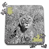 Angelique Cajam Big Cat Safari - Young lion looking at a pray - 10x10 Inch Puzzle (pzl_26821_2)