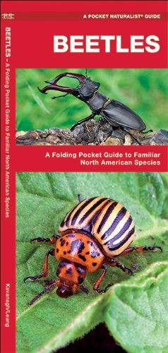 beetles-a-folding-pocket-guide-to-familiar-north-american-species-pocket-naturalist-guide-series