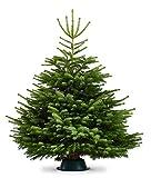 Lawn & Patio - Echter Weihnachtsbaum - Nordmanntanne frisch geschlagen, ca. 100-140 cm - Abies nordmanniana