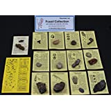 Fossil Collection (13 pc.) with Id Cards & Trilobite, Sharks Teeth, Coprolite (Fossilized Turtle Poop) Educational
