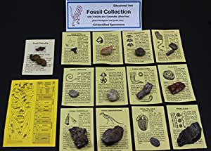 Dancing Bear's Rocks and Minerals Fossil Collection with Id Cards & Trilobite, Sharks Teeth, Coprolite (Fossilized Turtle Poo