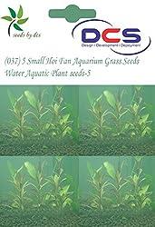 DCS(037) 5 Small Hoi Fan Aquarium Grass Seeds Water Aquatic Plant Seeds-5