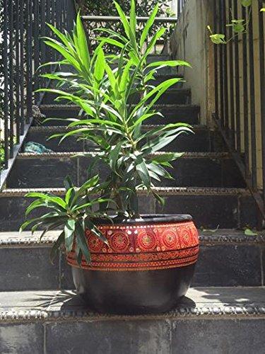 The Garden Store Ceramic Big Planter - Black