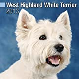 West Highland White Terrier W 2013