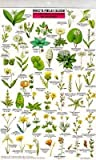 Search : Mac&#39;s Field Guide To Northern California Wildflowers &#40;Mac&#39;s Guides &#40;Flash Cards&#41;&#41;