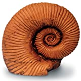 4 In Ammonite