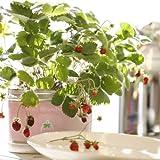 家庭菜園 リトルガーデン・プロ ワイルドストロベリー