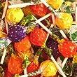 SWIZZELS MATLOW FRUITY POPS LOLLIES 250g