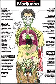 the negative effects of inhalants on the human body The heart is one of the most important organs in the human body, and it also happens to be especially susceptible to the effects of alcohol while heart complications caused by alcohol are.