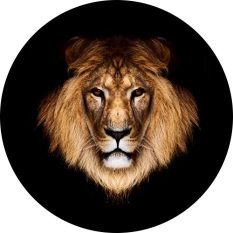 Lion Head Spare Tire Cover for Jeep RV Camper and more (Select from popular sizes in drop down menu or contact us-ALL SIZES AVAILABLE) ... (Lion Spare Tire Cover compare prices)