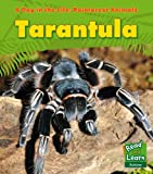 Tarantula (A Day in the Life: Rainforest Animals) Anita Ganeri