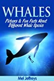 Whales Pictures & Fun Facts About Different Whale Species